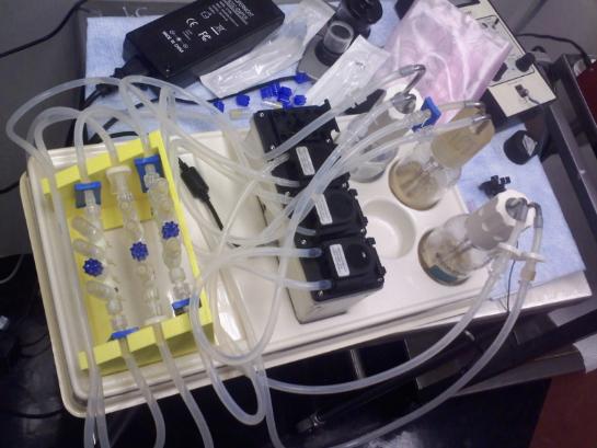 vitro-cell